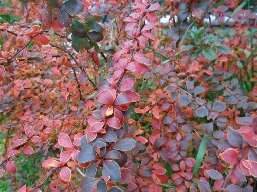 plant bush nature