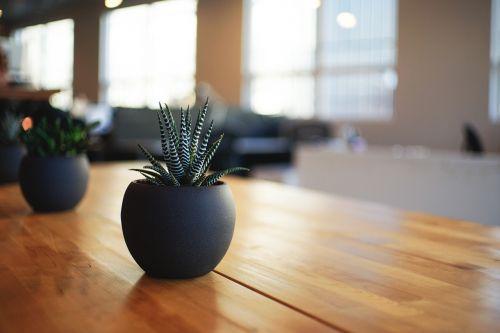 plant houseplant indoor