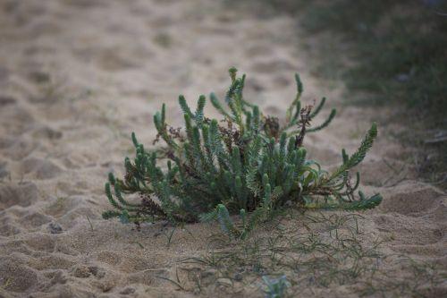 plant sand plant sea