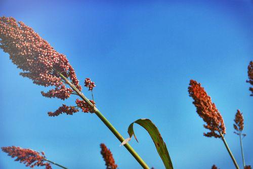 plant flower aloe ferox
