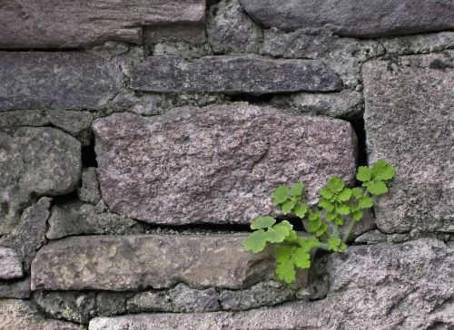 plant wall nature