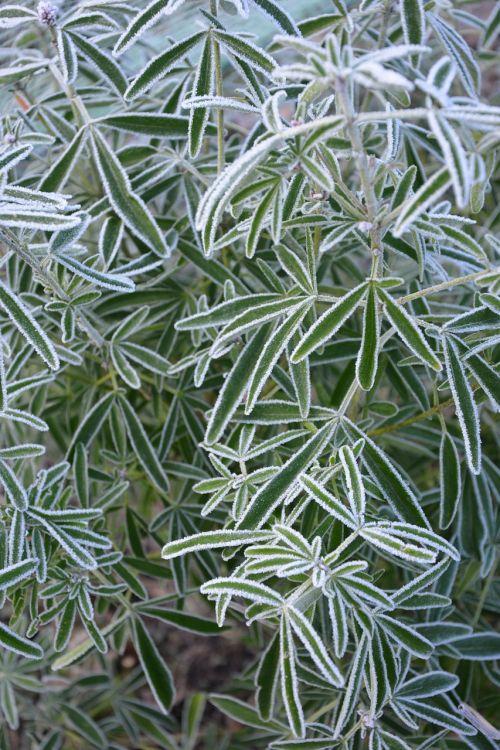 plant gel winter
