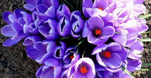 plant april flowers