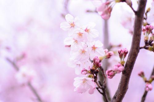 plant spring flowers