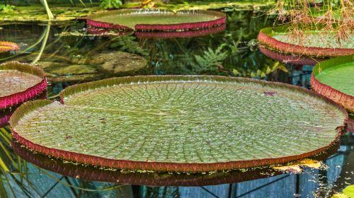 plant aquatic plant flower