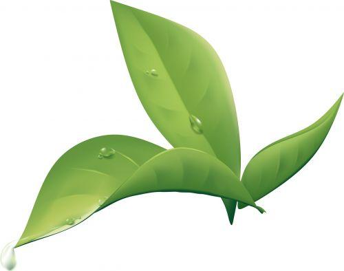 plant leaf wet