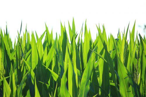 plant green leaf