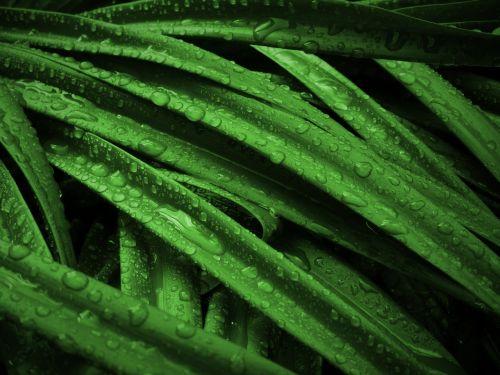 plant grass green