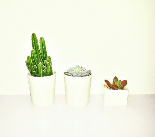 plant green potted plants