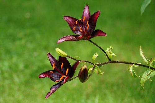 plant flower blossom