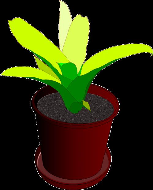 plant pot flower pot