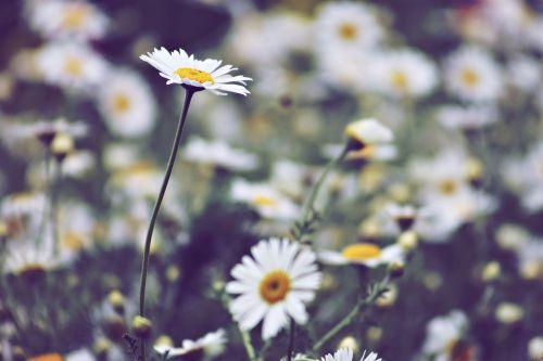 plant field meadow