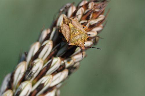 plant bug spikes