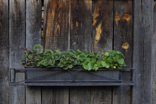 plant planter rustic
