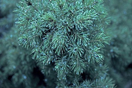 augalas,žalias,gamta,augimas,lapai,sodas,natūralus,medis,rasa,vanduo,gyvas,lapija,miškas,diena,šlapias,gyvas,spalvinga