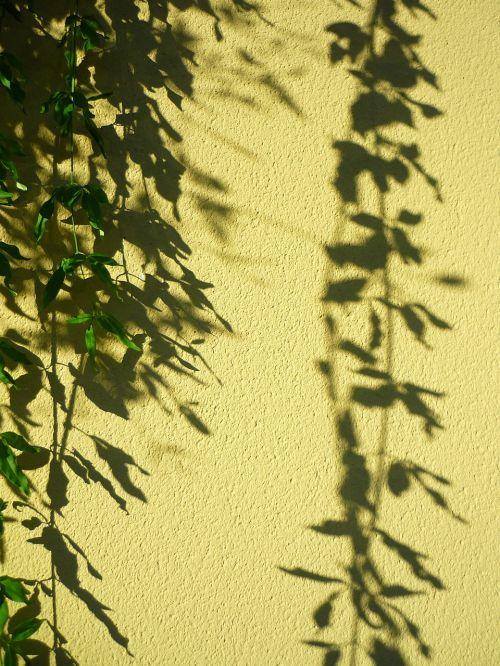 plant pendant shadow