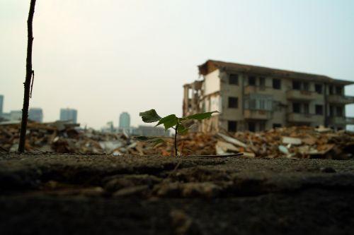 plant leaf building