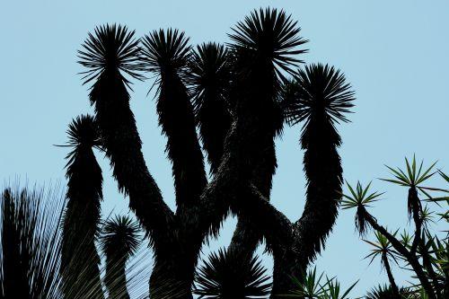 plant botanical backlight