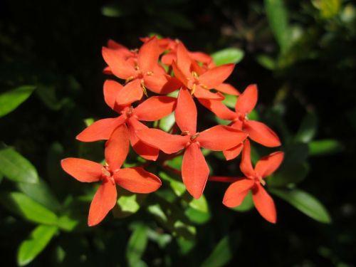 plant flower grass