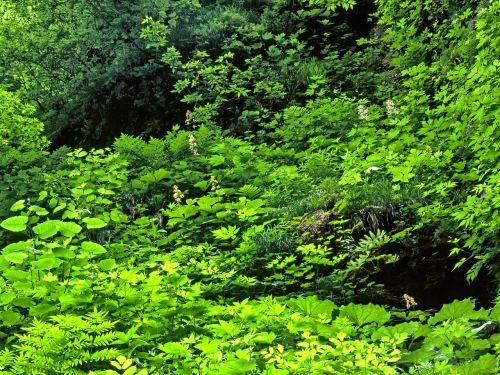 plant diverse green