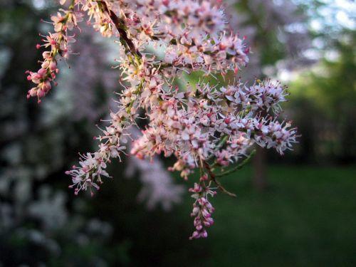 plant shrub flowers