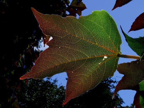 plant leaf wine partner