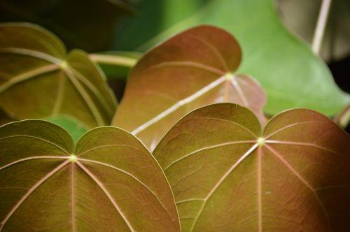 plant leave flora