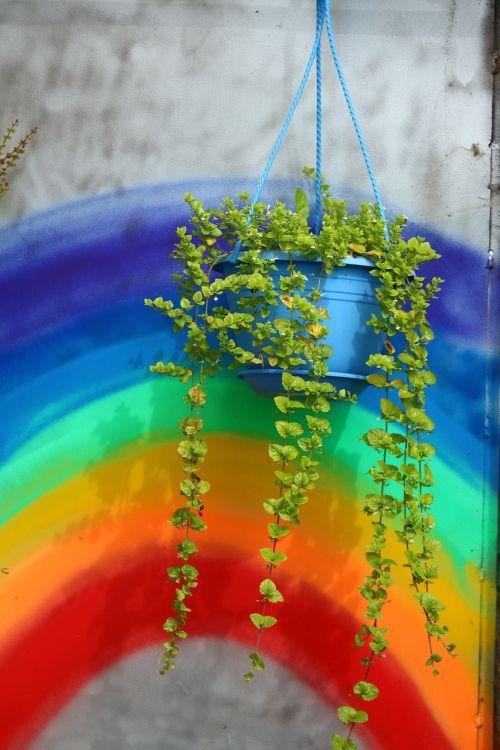 plant rainbow hanging plant
