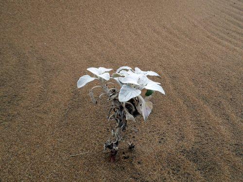 plant sand nature