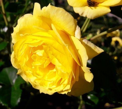 plant flower ros