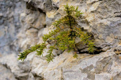 plant rock stones