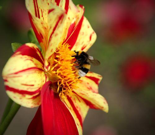 plant flower nature