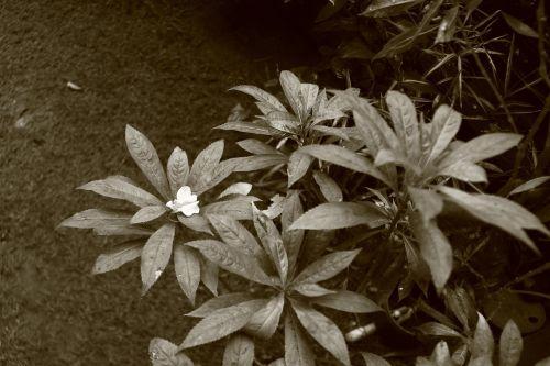 plant garden monochrome