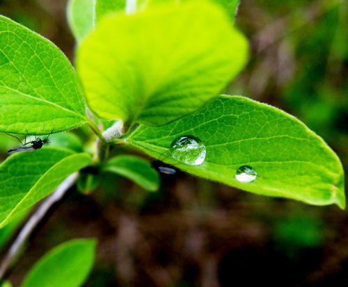 plant leaf leaves