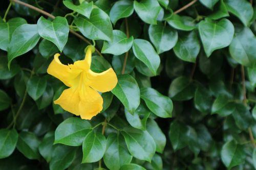 plant ornamental kind of wood