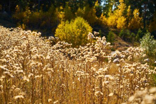 augalas,sausas,lapai,dea,geltona,gamta,makro,sausas lapai,fonas,tekstūra,sudžiūvęs,ruduo,lapai yra