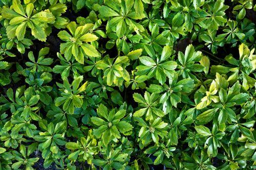 plant foliage green