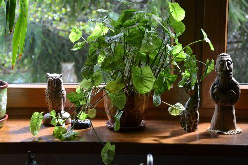 plant plants leaf