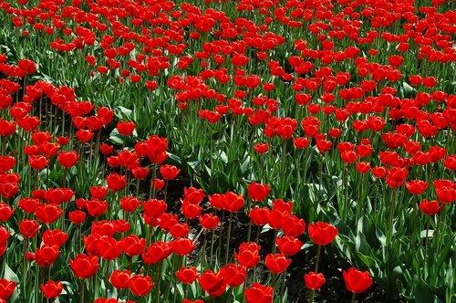 plant  garden  field