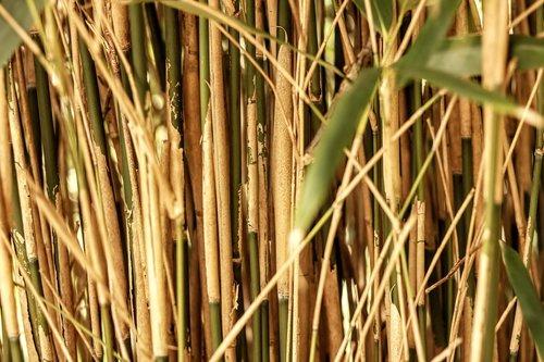 augalų, pobūdį, maisto, lapų, bambuko, Reed, Žemdirbystė, žolė, cukranendrių, mediena, vasara, fonas, pavasaris, Sodas vasarą, šiaudų ryšulius, šviečia, krūmas, drėgna, ežeras, Stengel, stiebų, slėpimosi vieta, derlius, sausas, Golden, aukso geltonumo spalvos, šiaudų, kaimo, nuotaika, nuimami, ražienos, Lentos tvora
