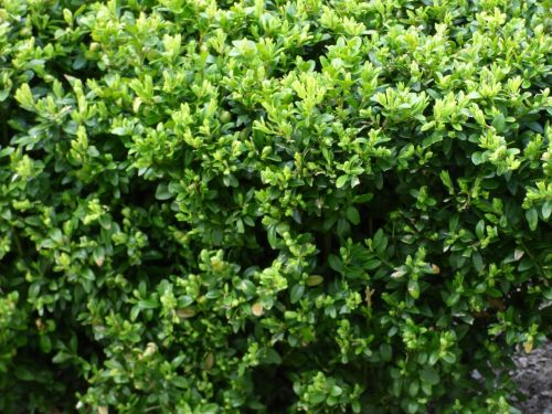 plant vegetation green