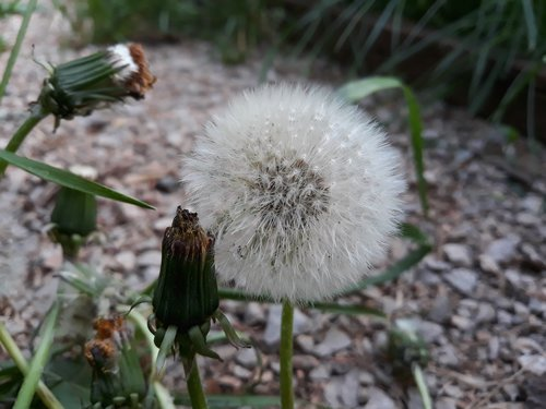 plant  nature  flower
