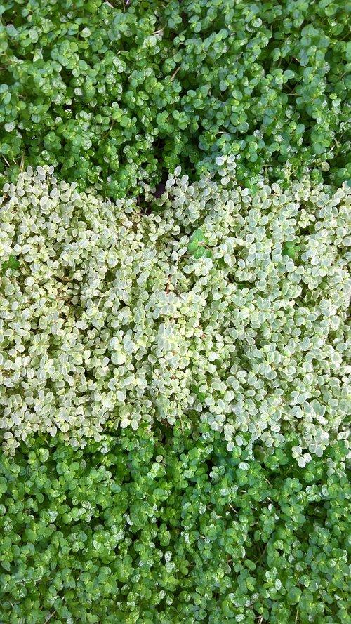 plant  nature  leaf