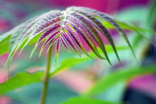 plant  garden  nature