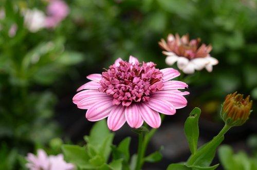plant  flower  floral