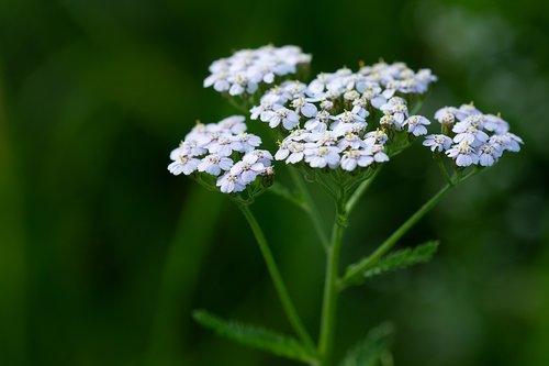 plant  flowers  white flowers