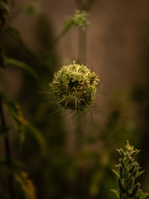 plant  blossom  bloom