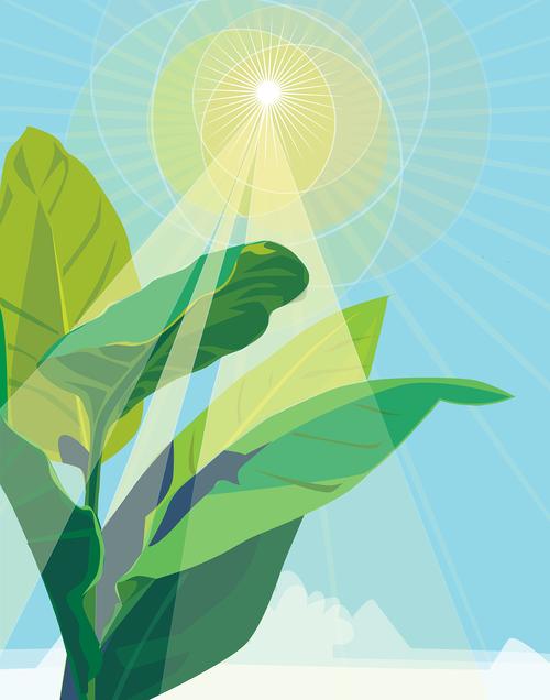 plant  photosynthesis  sunlight