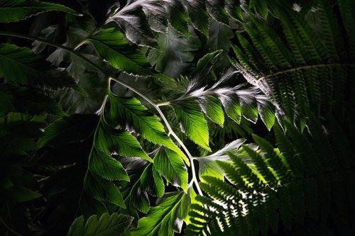 plant  garden  botany