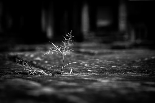 plant  tiny  nature